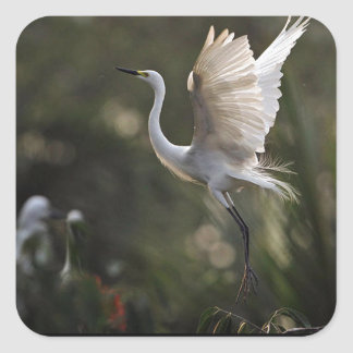 Egret Defending Her Young Square Sticker