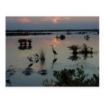Egret del punto negro tarjetas postales