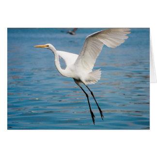 Egret del vuelo tarjeta de felicitación