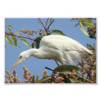 egret en árbol de mango fotografía