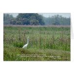 Egret en el campo de la tarjeta de las flores