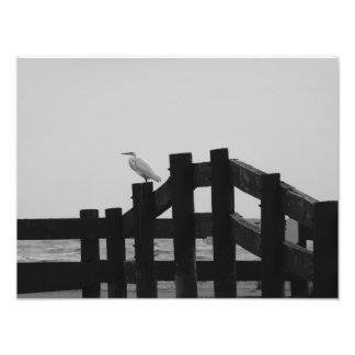 Egret en la foto de los carriles