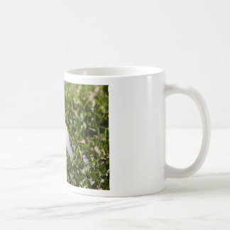 Egret en la hierba taza de café