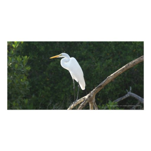 Egret en los mangles de San Blas Tarjeta Personal
