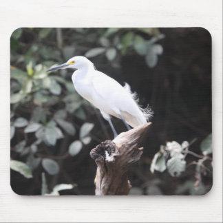 Egret en rama por el río alfombrillas de ratón