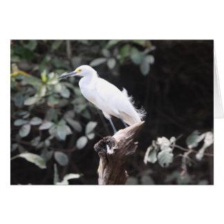 Egret en rama por el río tarjeta de felicitación