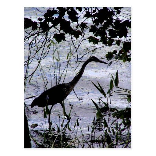 Egret en un paseo tarjetas postales