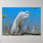 Egret en una impresión o un poster del árbol