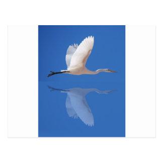 Egret flying postcard