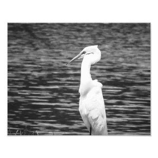 Egret Fotografías