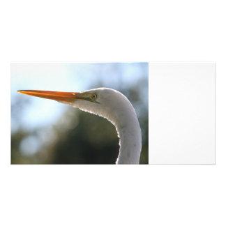 egret head close up neat original bird photograph photo card