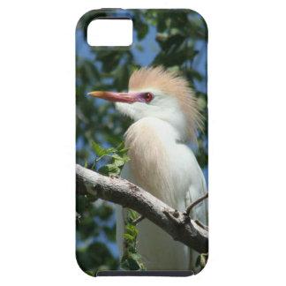 Egret hermoso en plumaje de la cría iPhone 5 Case-Mate funda