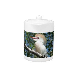 Egret hermoso en plumaje de la cría