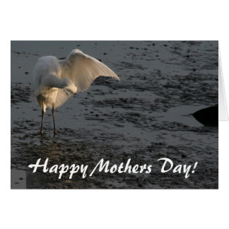 Egret Heron Bird Wildlife Animal Mothers Day