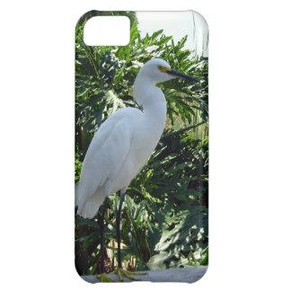 Egret imponente