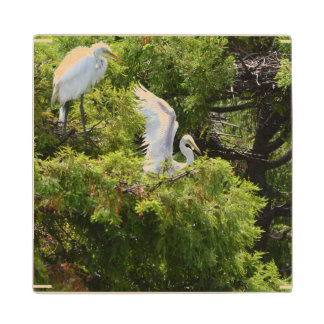 Egret in a Tree Maple Wood Coaster