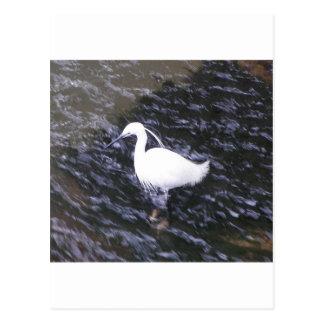 Egret in fast flowing river postcard