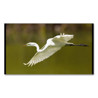 egret in flight magnetic business cards (Pack of 25)