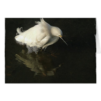 Egret in Lake Merritt, by Heidi Rand Card