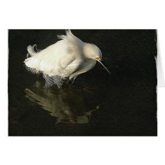 Egret in Lake Merritt, by Heidi Rand Cards