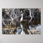 Egret in Louisiana Bayou - Poster