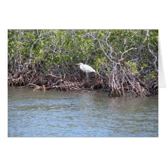 Egret in Mangroves Card