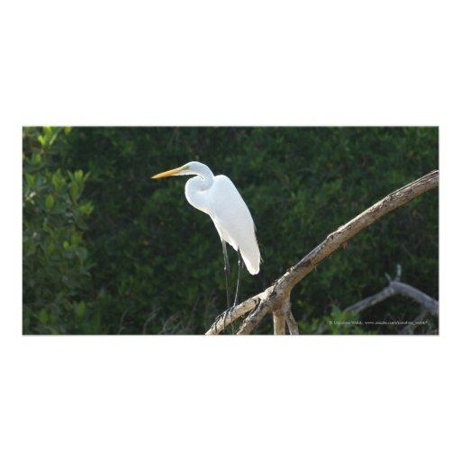 Egret in San Blas Mangroves Customized Photo Card