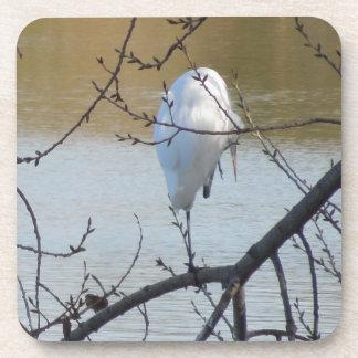 Egret in Tree Drink Coaster