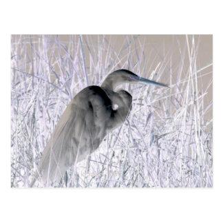 egret invert bw haunted postcard