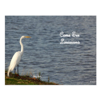 Egret inviting you to come to Louisiana Postcard
