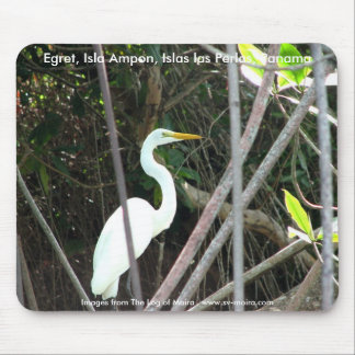 Egret, Isla Ampon, Islas las Perlas, Panama Mouse Pad