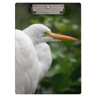 Egret looking right against green c bird clipboards