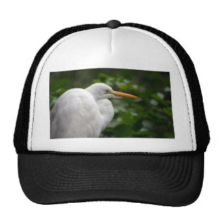 Egret looking right against green c bird hat