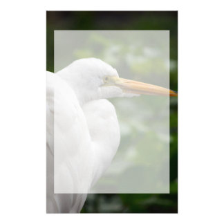 Egret looking right against green c bird stationery