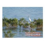 Egret magnífico de la postal de Oklahoma del lago