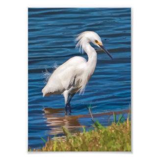Egret nevado en la charca cojinete