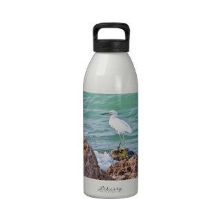 Egret nevado en las rocas botallas de agua