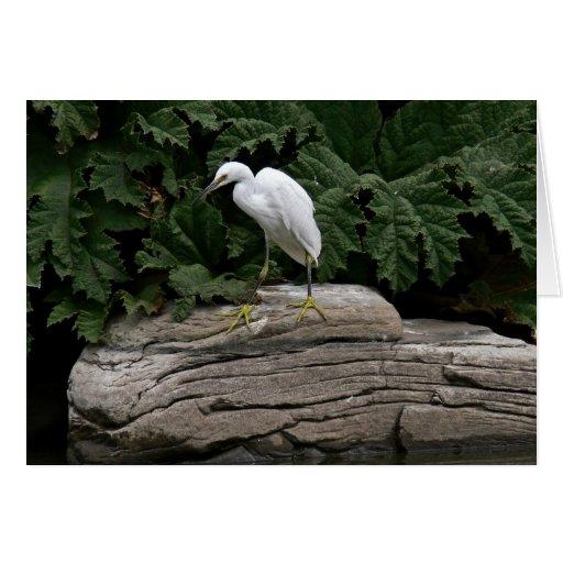 Egret nevado felicitacion