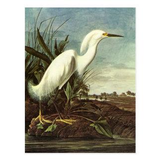 Egret nevado John James Audubon Postales