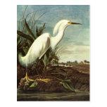 Egret nevado, John James Audubon Tarjetas Postales