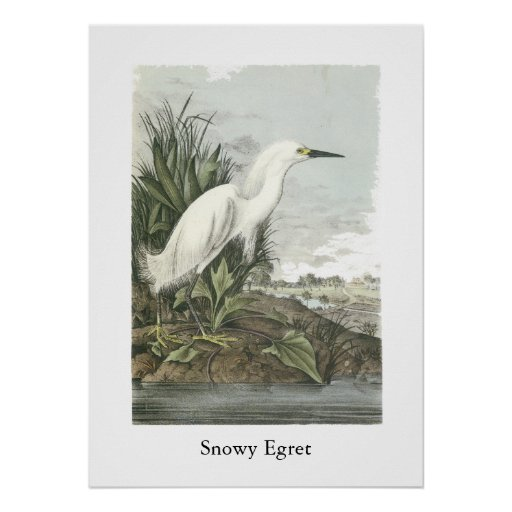Egret nevado, Juan Audubon Impresiones
