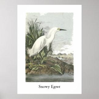 Egret nevado Juan Audubon Posters