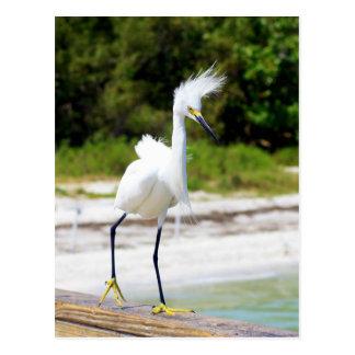 Egret nevado soplado viento tarjeta postal