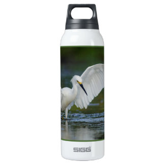 Egret nevado (thula del Egretta)