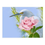 Egret nevado y postal color de rosa rosada