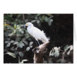 Egret on branch by river greeting cards
