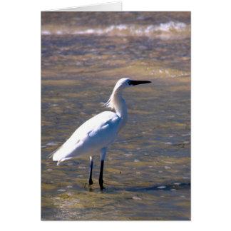 Egret on Caladesi Island Beach Card