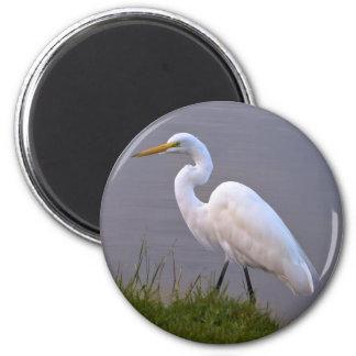 Egret que da un paseo en el imán de la luz del sol