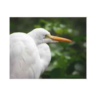 Egret que parece derecho contra pájaro verde de c impresion en lona