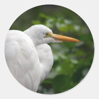 Egret que parece derecho contra pájaro verde de c pegatinas redondas